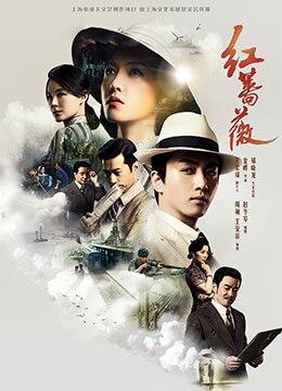 《红蔷薇》2017年中国大陆剧情电视剧在线观看