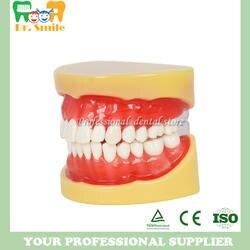 Зубные все зубы Съемный Стандартный зубов Модель 28 шт. зубы студент модель обучения