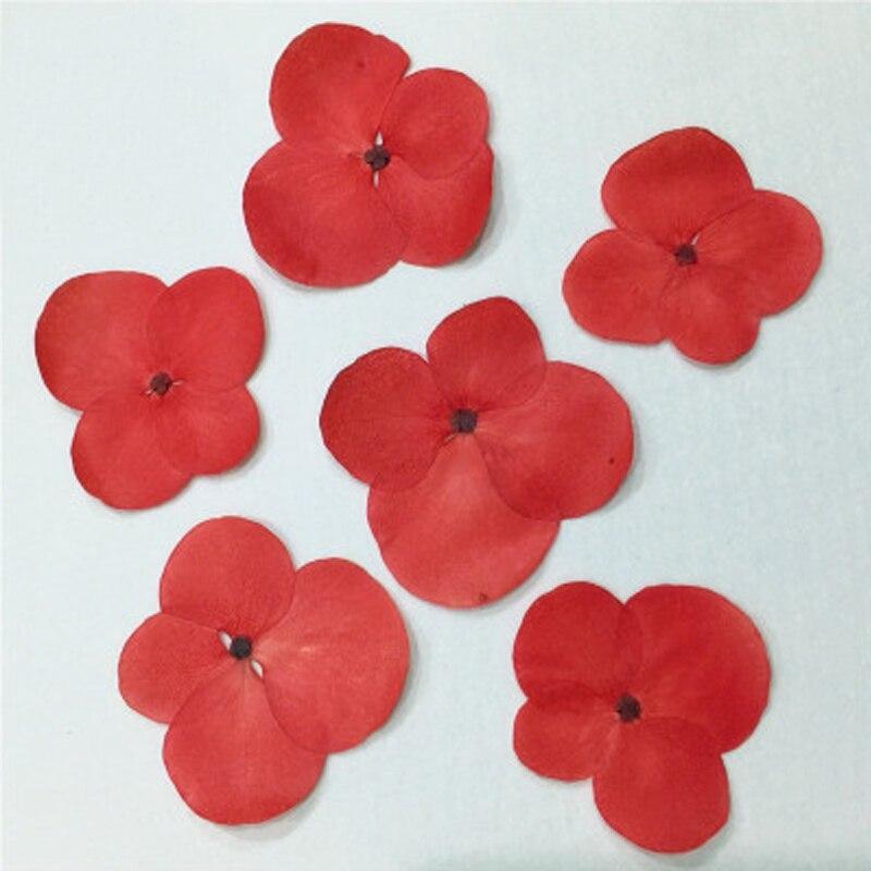 Красный гортензия для рождественские украшения Малый настоящие высушенные цветы для сотового телефона Бесплатная отправка 1 лот/120 шт.