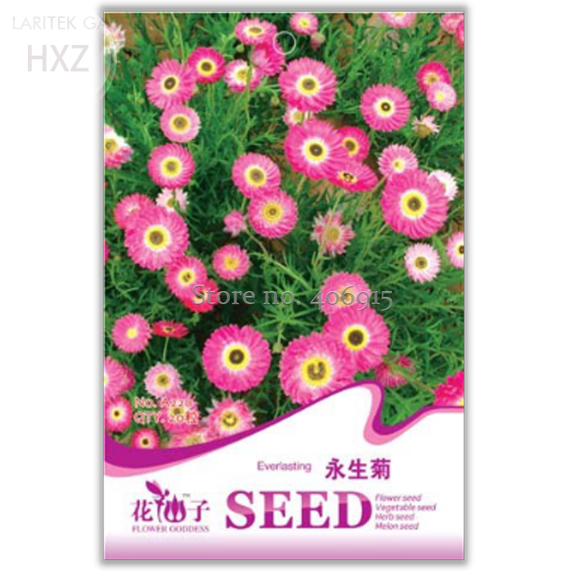 Cheap Plants That Grow Fast: Online Buy Wholesale Everlasting Flower From China