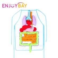 Enjoybay 3D орган для тела плюшевая игрушка с фартуком Виссера обучающая утварь орган для тела s осознание СПИДа ранняя развивающая игрушка для малыша