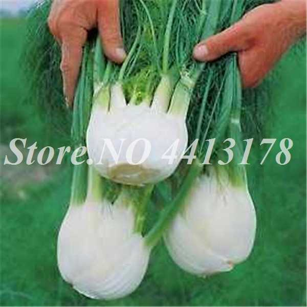 100 Pcs/Tas Bonsai Adas Perennial Herb Tanaman Segar & Hijau Organik Outdoor Pot Sayuran DIY Rumah Taman Penanaman Mudah Tumbuh