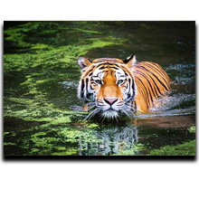 The king of the forest only diamond mosaics resin handicraft Cross-stitch painting Embroidery Tiger
