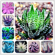 200pcs Aloe bonsai Mix Excellent Houseplants Succulent Vera Use Beauty Edible Cosmetic Bonsai Plants Planting