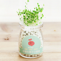 Lovely Office Desktop Hydroponic Carbon Ball Small Potted Plants Mini Glass Flower Pot Vase Bonsai Seed