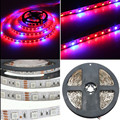 Grow LED Flexible Strip 5050 Tape Light DC12V Red Blue 3:1 or 4:1 for Greenhouse Hydroponic Plant Growing