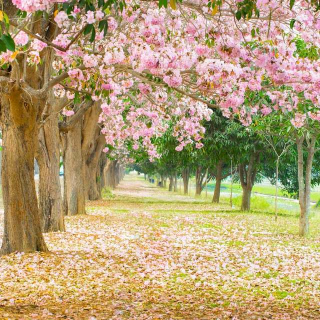 Online Shop Backgrounds Photographic Beautiful Forest Path Pink