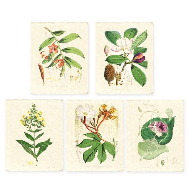 Vert plantes ensemble de 5 Vintage illustrations Botaniques, art floral imprime HD impression Fleur Wall Art tirages seulement sans cadre 5