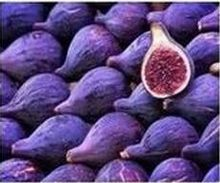 Ficus carica – Rare Purple Fig Seeds Edible Fruit Tree / Plant seeds – 100 FINEST SEEDS