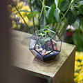 Цветочный горшок Micro Bonsai ручной работы  художественный прозрачный Пентагон  Террариум  стекло геометрической формы  сочный папоротник  мох  ...