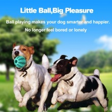 Pet Dog Toys Bite Resistant Toy Ball