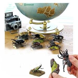 Image 4 - Original 11 ชิ้นแมลงญี่ปุ่นด้วง STAG Beetle กระเป๋าหนอนสัตว์ Figurine เด็กของเล่นสะสม