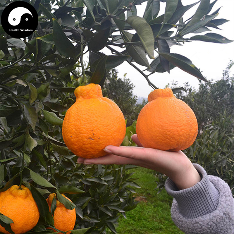 Buy Ugly Orange Fruit Semente 60pcs Plant Citrus Tree For Fruit Sweet Orange