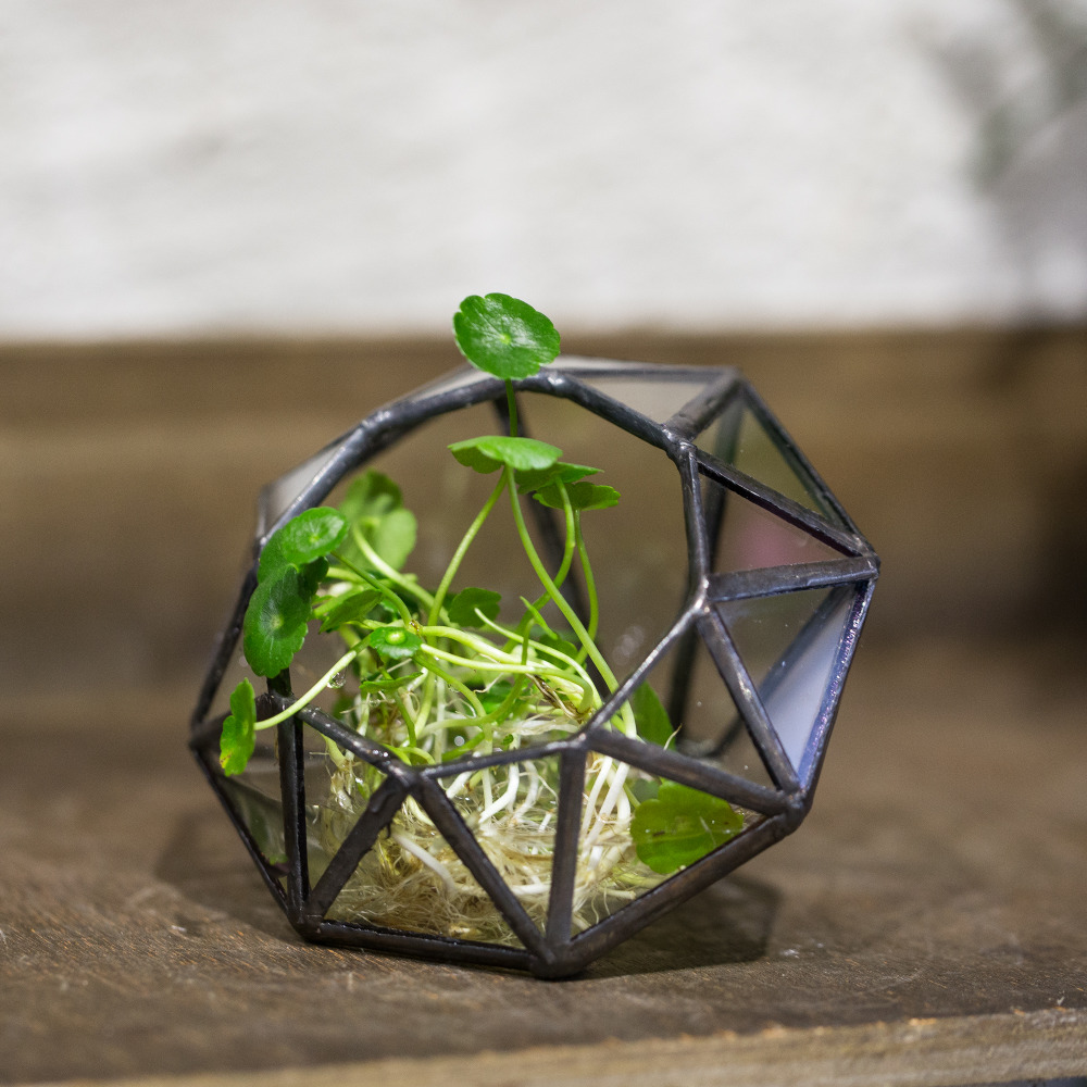 Pastoral Microscape Eight surfaces Diamond Glass Geometric Terrarium Succulent Green Plants Fern Moss Planter Bonsai Flower