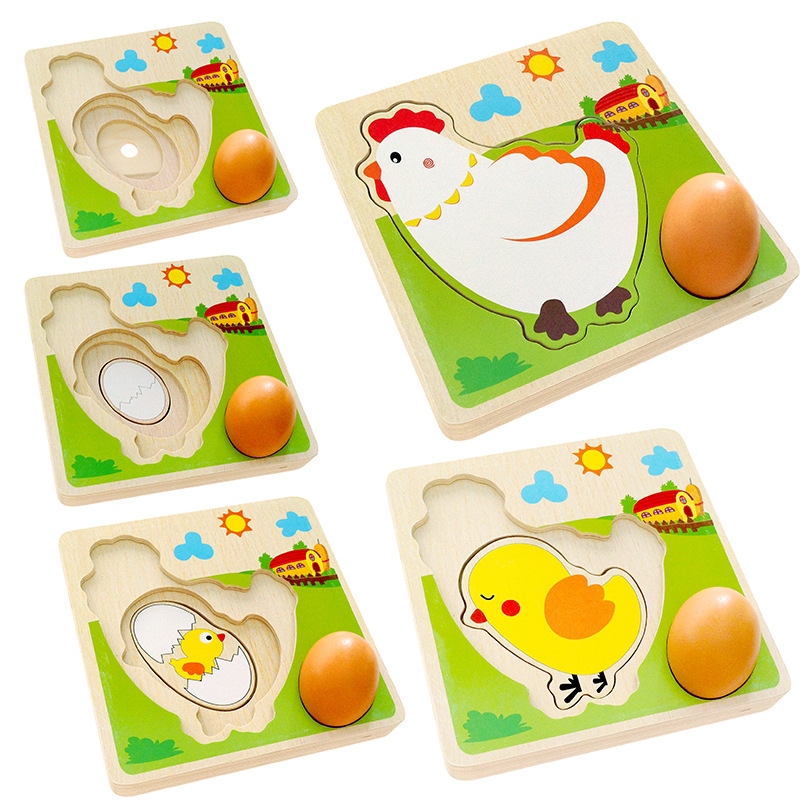 1 set multilayer chicken growth hen growing up cartoon for Model chicken set