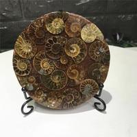 natural snail slice chrysanthemum petrified stone specimen for home decor