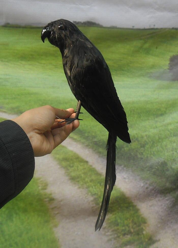 Nouveau jouet de perroquet de simulation créative en polyéthylène et fourrures modèle de perroquet noir cadeau environ 40 cm 1596