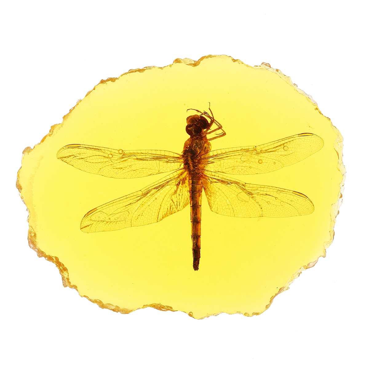 Натуральный Янтарный Стрекоза Скорпион бабочка геккон насекомое ручной полировки украшения DIY Орнамент Ремесло подарок для дома - Цвет: Dragonfly