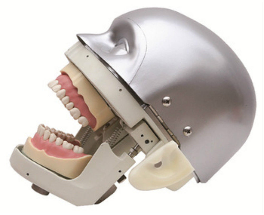 Dental Simulator Manikin Phantom Head Demonstrations Practical Exercises