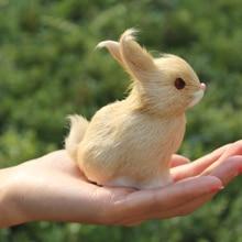 Bunny Rabbit Buy Cheap
