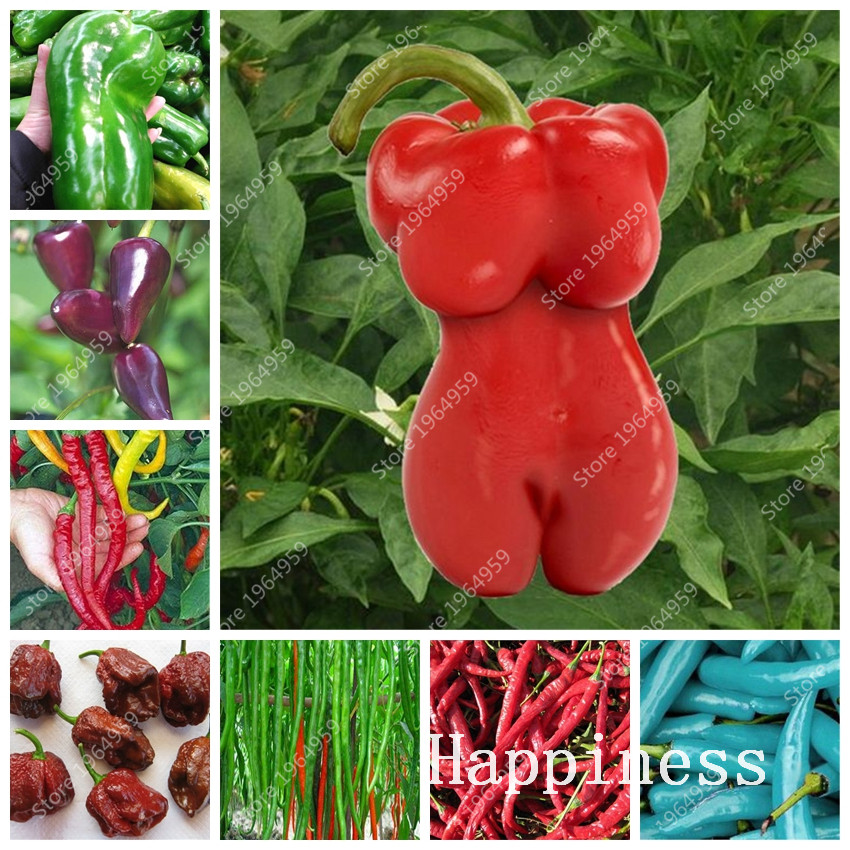 100 Pcs Mixed Hot Chili Sweet Bell Hot Pepper Bonsai Carolina Reaper Vegetables Paprika Plantas Garden Decoration Easy Grow