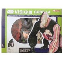 Gorilla Anatomical Model Chimpanzees Skeleton model 4D Master Anatomy Dimensional Anatomical Model Science Education Model Toy