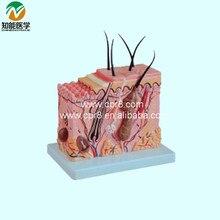 BIX-A1059 Normal Skin Model  MQ145