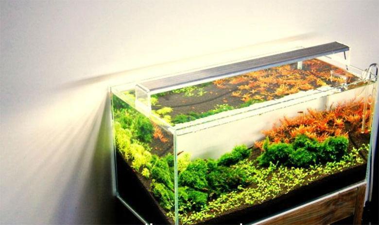 Buy Chihiros Ada Aquasky Style Plants