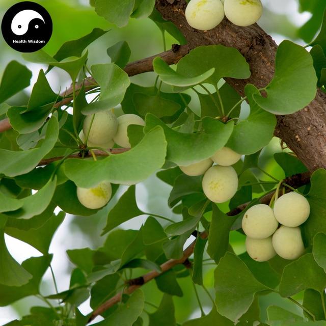 Ginkgo Biloba Tree Te 60pcs Plant Yin Xing For Herb Bai Guo