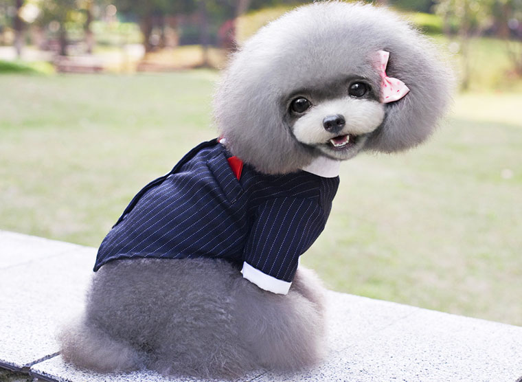 Big Dog Clothes Formal Large Dogs Wedding Tuxedo Suit Tie ...