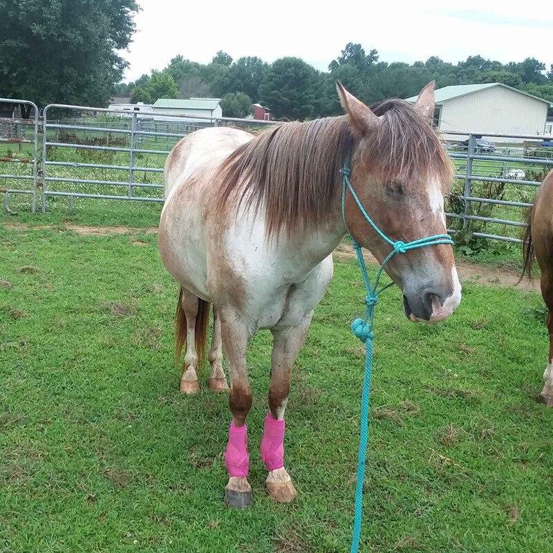 1 Pair Equestrian Horse Leggings Horses Sticky Adjustable Leg Protector Harness Horse Care Legwarmer Riding Equipment F