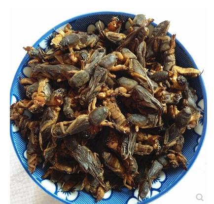 Wild Dried Mole Cricket Traditional Chinese Medicine 250g pearl 250g