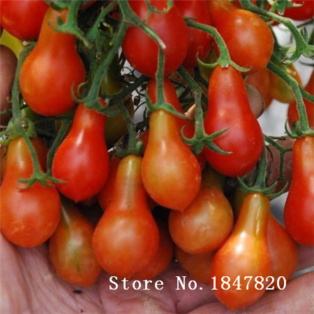 Bonsai tomato Seeds 100pcs 10kinds mix vegetable Seeds Novel Plant for Garden Free Shipping