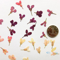 50 Pcs Dried Candytuft Samples Creative DIY Cards Accessories Handmade Material Romantic Flower Multicolor