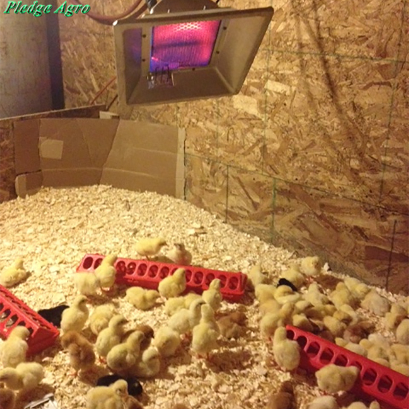 Gas Geaters For Brooder Hanging Flameless Catalytic Infrared Farming Equipment Poultry Day Old Chick Warm Adjust Heat System