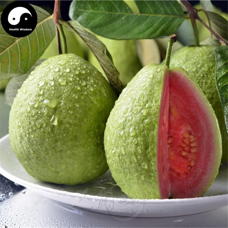 Buy Red Guava Fruit Tree Semente 240pcs Plant Fruit Psidium Guajava Grow Fan Shi Liu