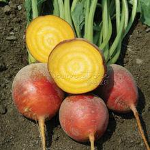 100 nutritious Golden Beet Seeds