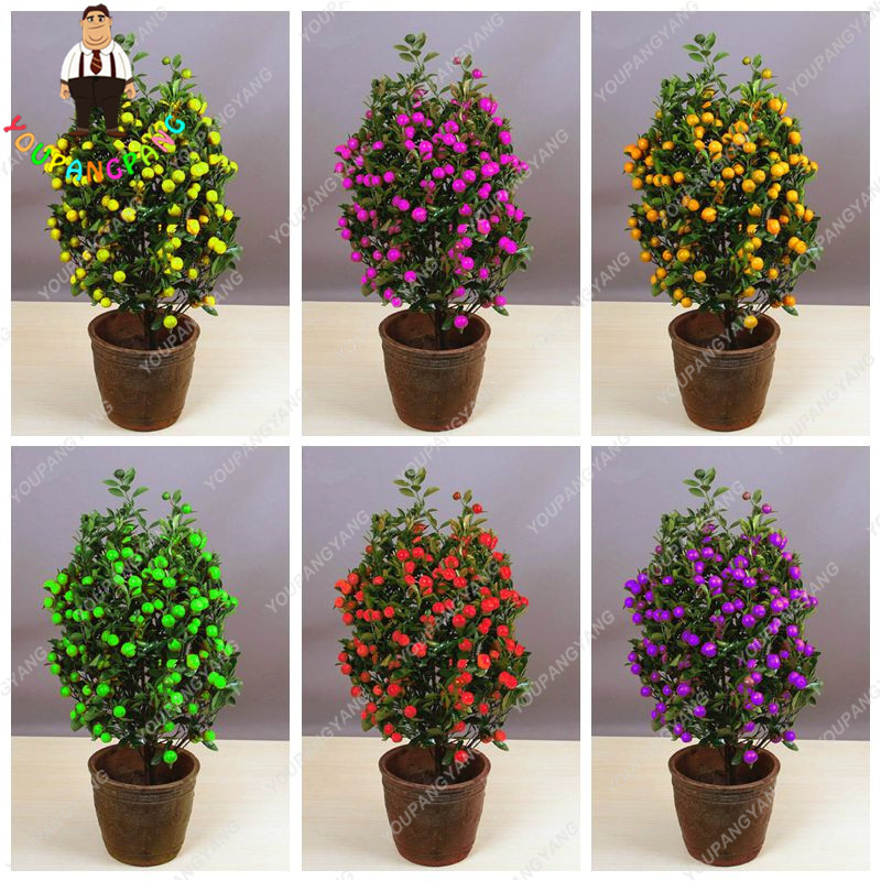 30pcs Rainbow Mandarin Tree Colorful Indoor Bonsai Tree Seeds Delicious Citrus Edible Fruit Bonsai Mandarins Orange Seeds