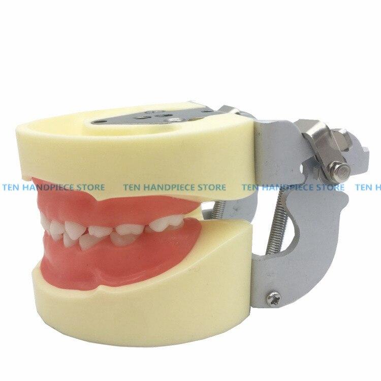 2019 good quality Dental oral teaching model child preparation model deciduous teeth preparation model removable teeth