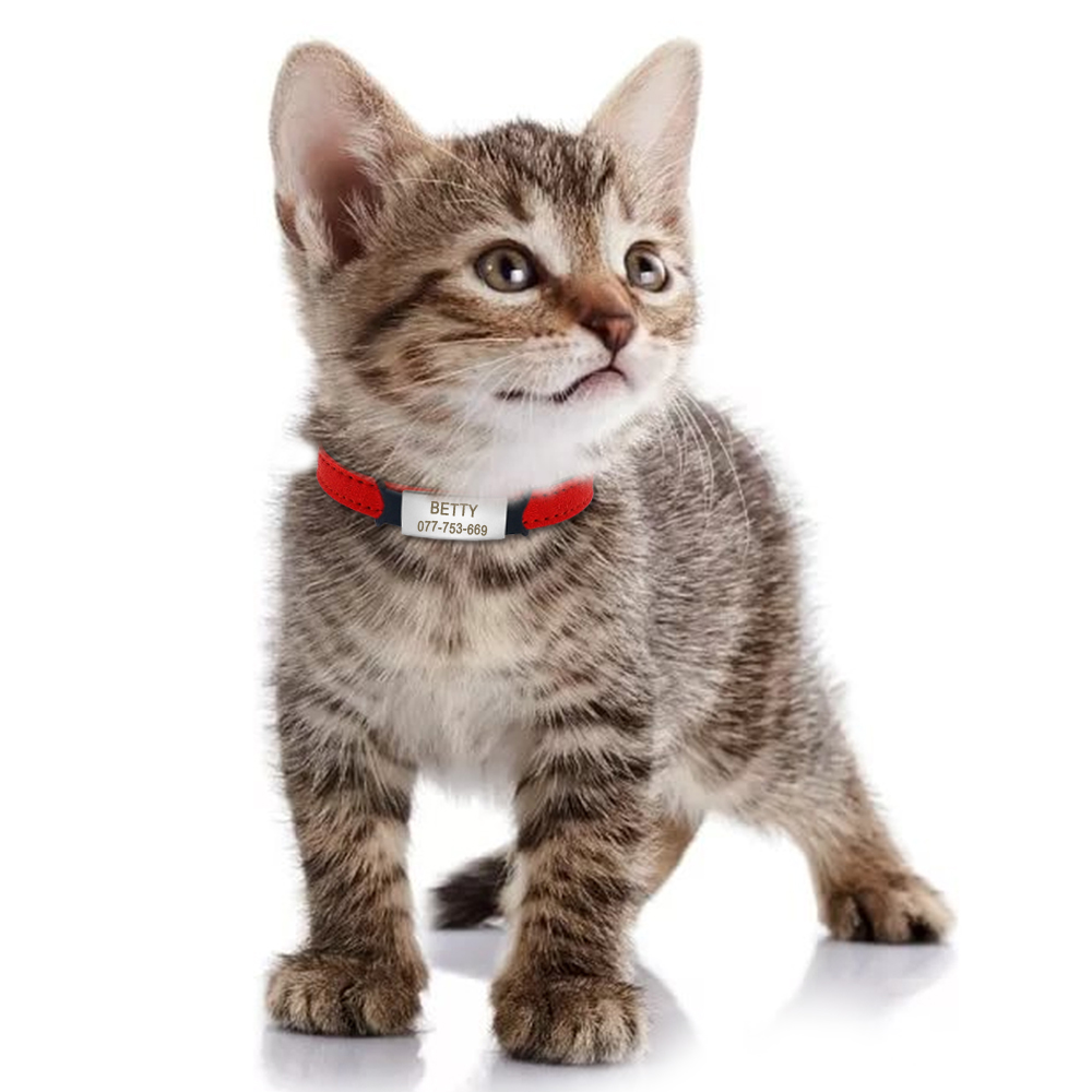 Soft Cat Collar And Tag Set Cat Dog Collars Personalized Padded Id Collars Puppy Pet For Small Medium Cats Free Bell Xxs #4