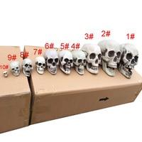 Настоящий череп #5