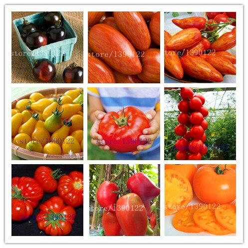 200/мешок семена помидоров помидоры черри семена овощей и фруктов семена, Устойчивые к болезням, декоративные завода фруктов дерево-саженцы