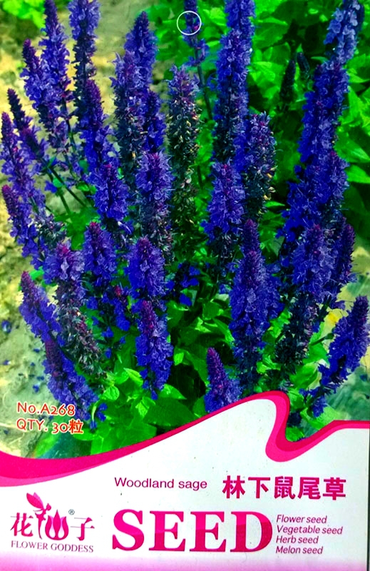 Blue woodland sage perennial flower seeds original pack 30 seeds blue woodland sage perennial flower seeds original pack 30 seeds pack salvia officinalis a268 in bonsai from home garden on aliexpress alibaba mightylinksfo