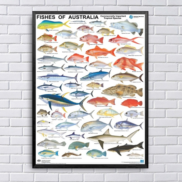 tropical home decor australia fishes of australia important tropical species chart art canvas  tropical species chart art canvas