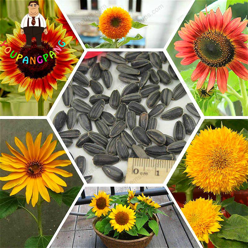 Park Seed Vegetable Seeds Flower Seeds Plants Bulbs