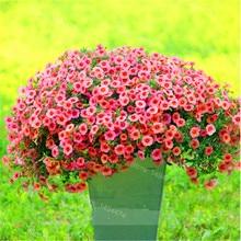 100pcs/bag hanging petunia seeds original flower seeds beautiful bonsai flower Natural growth petunia plant for home garden