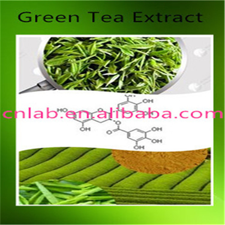 Pure natural 98% green tea extract powder ,stable green tea extract by professional manufacture pure natural radix sophorae flavescentis extarct kuh seng extract 100g lot