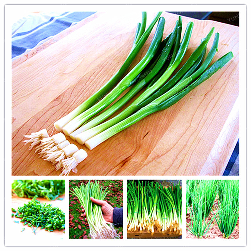 Stykker / taske 100 små grønne løg dværg træer organiske Heirloom grøntsager Bonsai lyng køkken madlavning mad plante pot eller ...