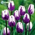 Духи 24 Цветов Тюльпан Семян высококачественные Семена Цветов Бонсай, самые Красивые и Красочные Тюльпан Растения Многолетние Дома Сад 10 ШТ.