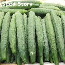 No-gmo Delicious Cucumber Sementes 100 Pcs / Lot Cucumber Seeds Rare Fruit And Vegetable Seeds For Home Garden Planting Bonsai